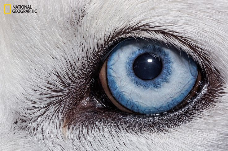 Domestic dog | These Extraordinary Close-Up Photos Of Animal Eyes Look Out Of This World