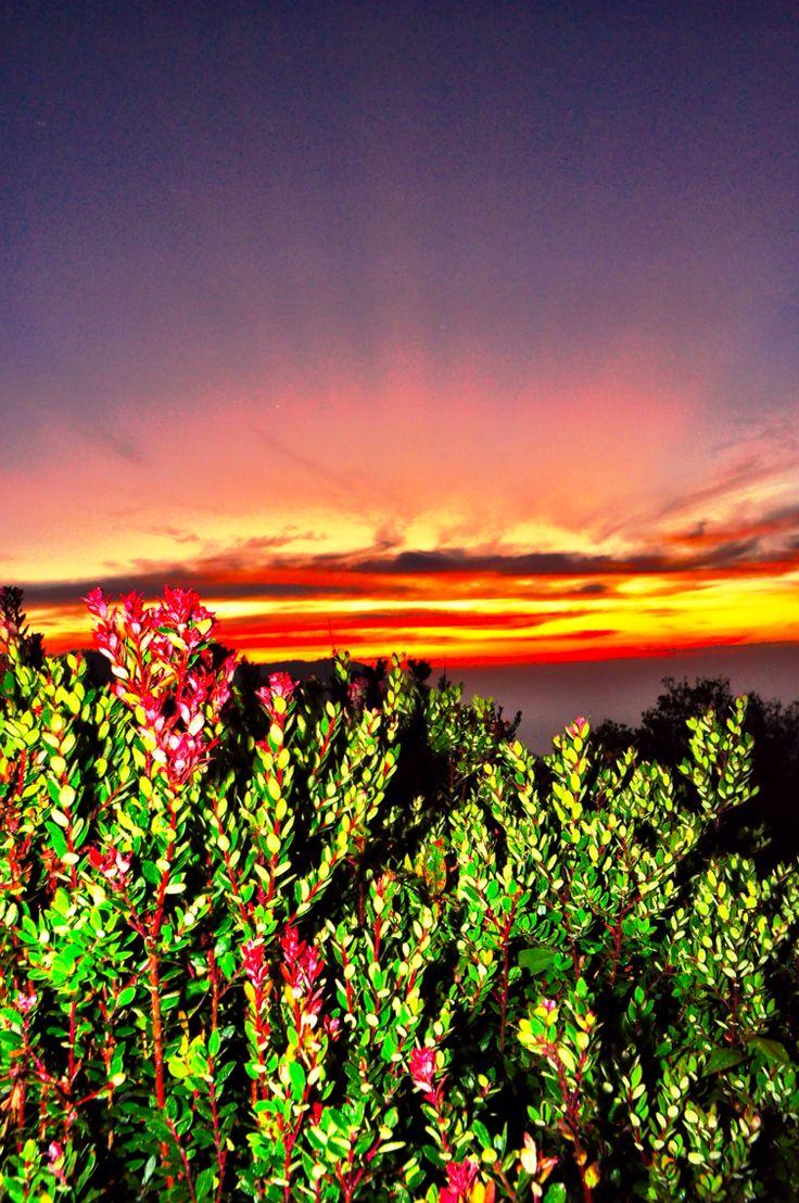 Bromo, East Java at Sunrise
