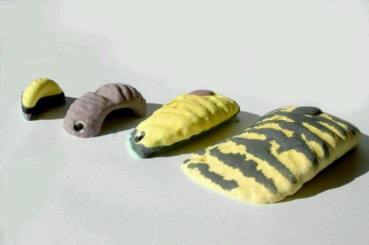 Concha-shell