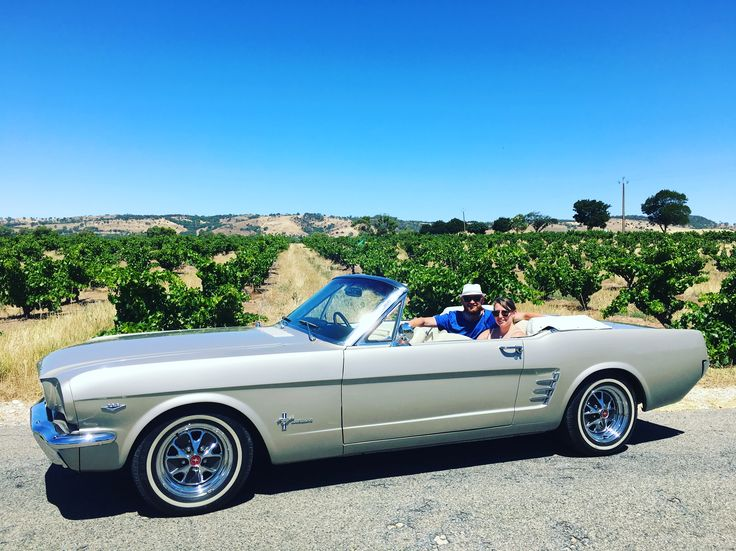 Mustang touring amongst 100 plus year old Grenache bush vines at Turkey Flat.