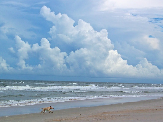 ~Beautiful, pristine beaches..just like old Florida when you had the beach to yourself.~