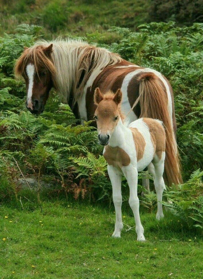 картинки животного лошадку это сочетание одного