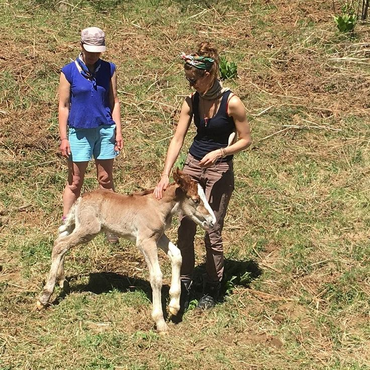 Katie and Louise with a wild two day old foal in the mountains above Dhamma Vihara #foal #borninthewild #wildhorses #meditationretreat #retreatcentre #dhamma #burgs #awakening #liberation #enlightenment #freedom
