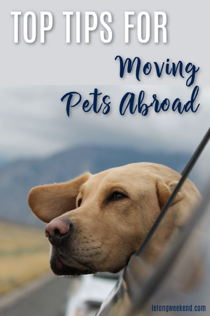 Top Tips For Moving Pets Abroad A Tale Of Two Retrievers Pet Travel Pet Transport Pets