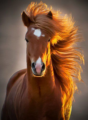 Most beautiful picture of a horse I have ever seen. The lighting is magnificent!