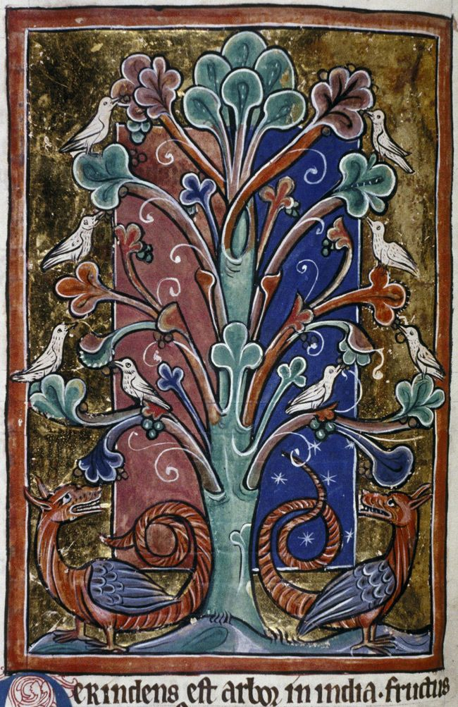 Bodleian Library, MS. Bodley 764, Folio 91v Doves perch in a peridexion tree, where they are safe from the dragons waiting below. The dragons cannot catch the doves unless they leave the tree.