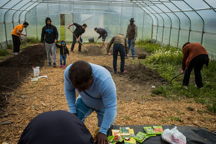 Alex Webb '16 Cleveland. Velma Scott's community garden, showing a gardening workshop and volunteer Case Western Reserve students working. Community gardening has emerged in Cleveland as a way to deal with the 50% population decline over the last 50 years. The city is one of the most prolific urban farming communities in the country