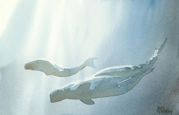 """""""Sperm whales"""", Peter Woolley."""