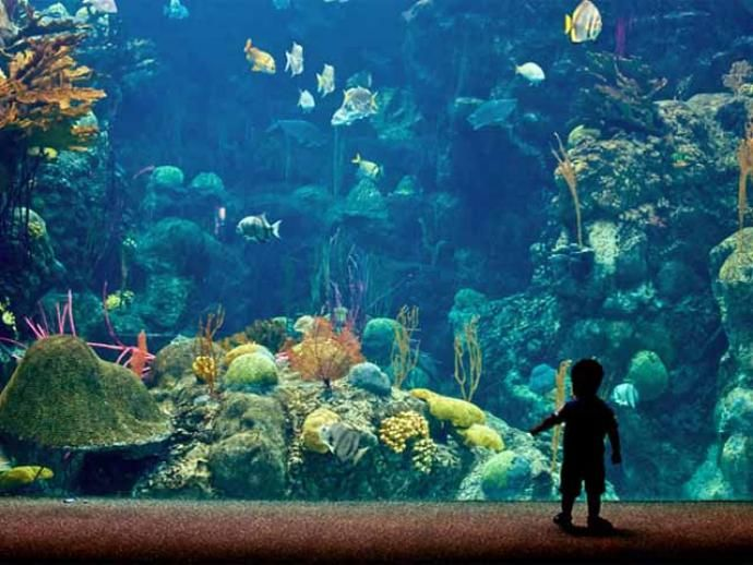 1000 Ideas About The Aquarium On Pinterest Chinese