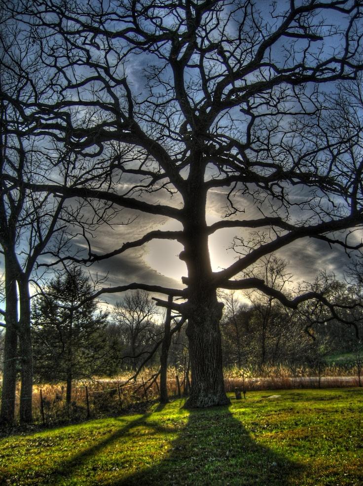 Tree at Nye Cemetery, Iowa