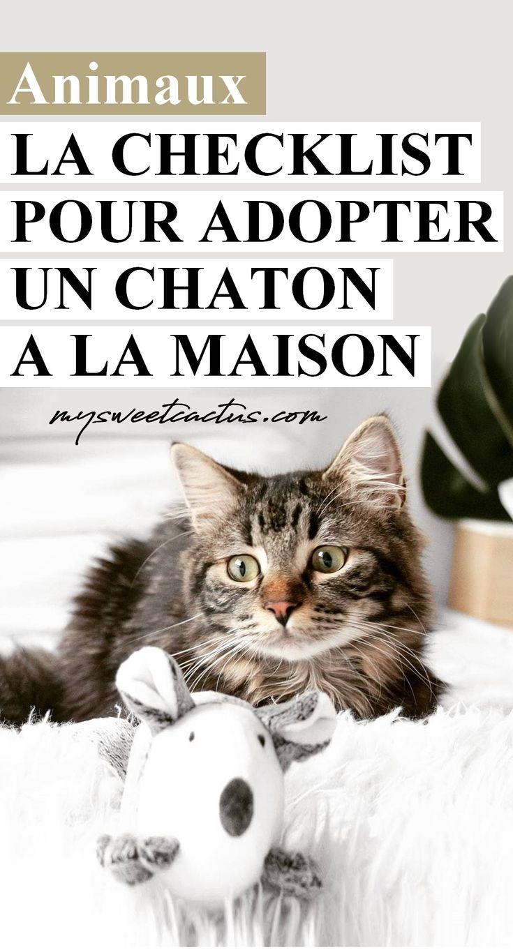 Checklist : la liste des choses à acheter avant d'adopter et d'accueillir un chaton à la maison. #chat #chaton #blogueuse #wishlist #animal