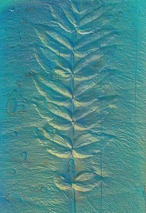 Remnant - plant pressing by Rick Silas