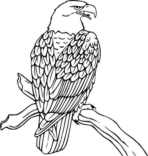 Bald Eagle Rest On Tree Coloring Page Eagle Drawing Bird Coloring Pages Animal Coloring Pages