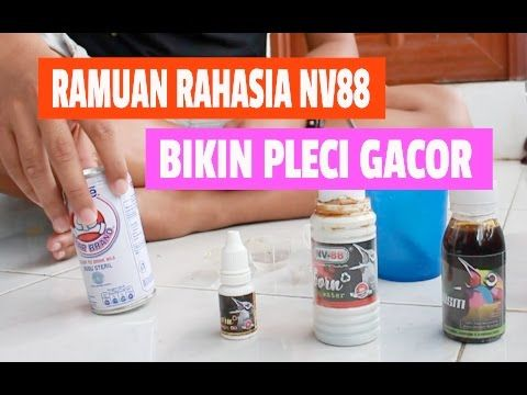 SUARA BURUNG : Pleci Muria Gacor Dada Kuning Mata Coklat - Haji Ifa Kudus - YouTube