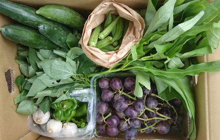 無農薬野菜の三芳村