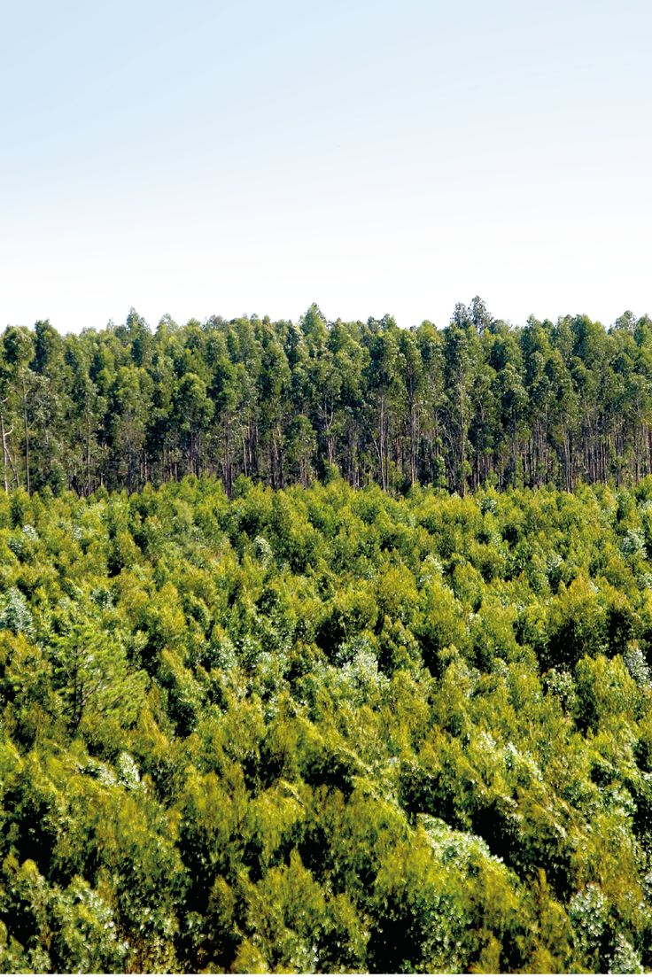A small part of our 120.000 hectares of forest. #thenavigatorcompany #paper #company #nature