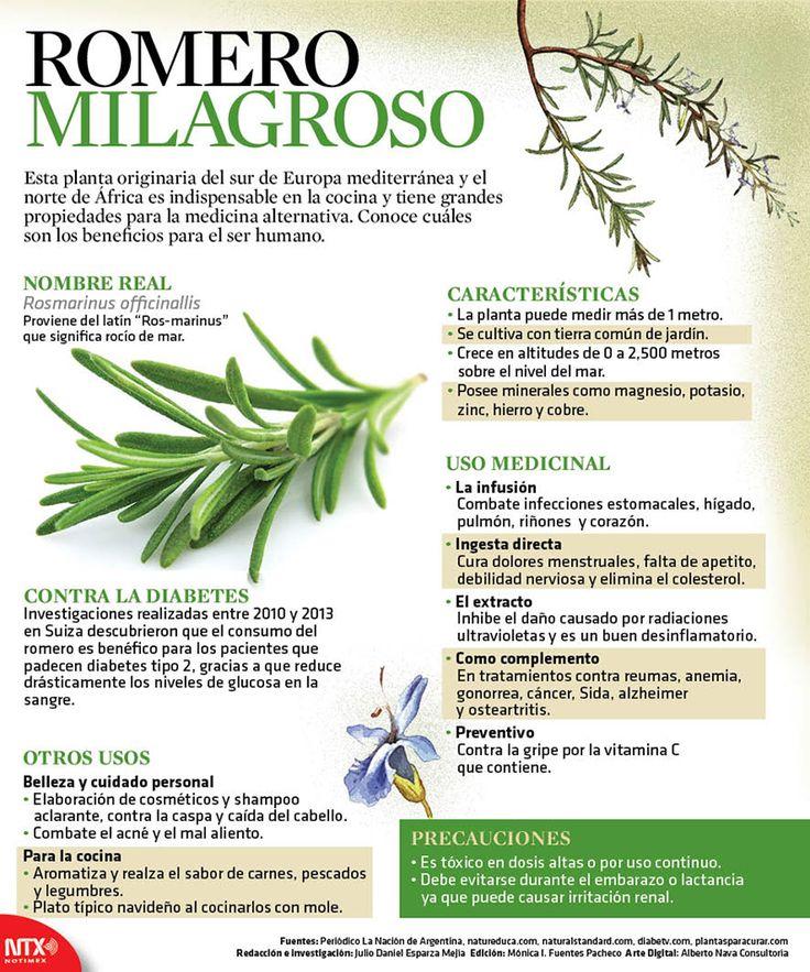Esta planta originaria del sur de #Europa mediterránea y el norte de África es indispensable en la cocina y tiene grandes propiedades para la medicina alternativa. Conoce cuáles son los beneficios para la #salud.