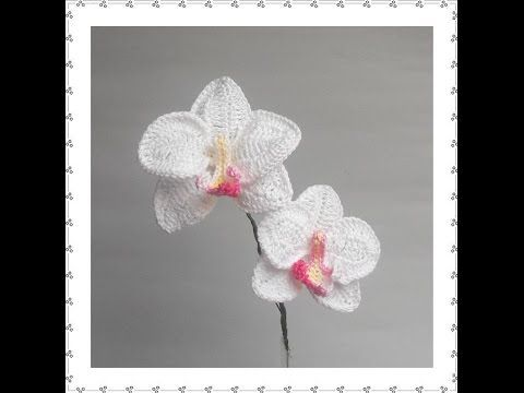 ORCHID A - YouTube