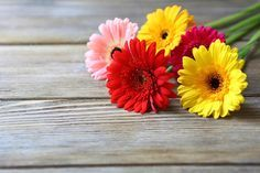 Decore seu casamento com flores baratas e bonitas; veja sugestões