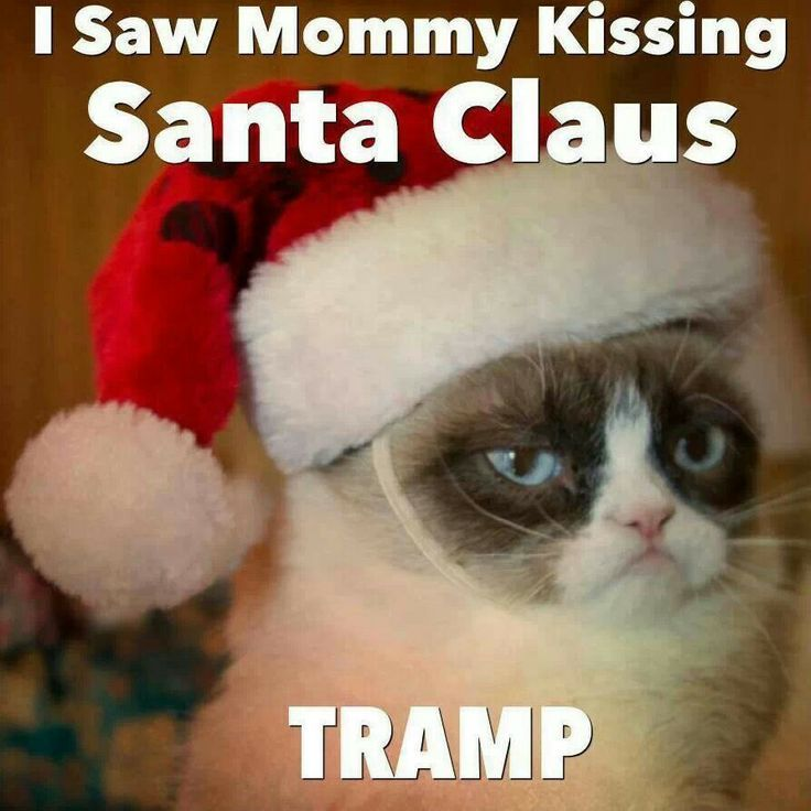 Funny Christmas Cat Meme : Best images about grumpy cat on pinterest