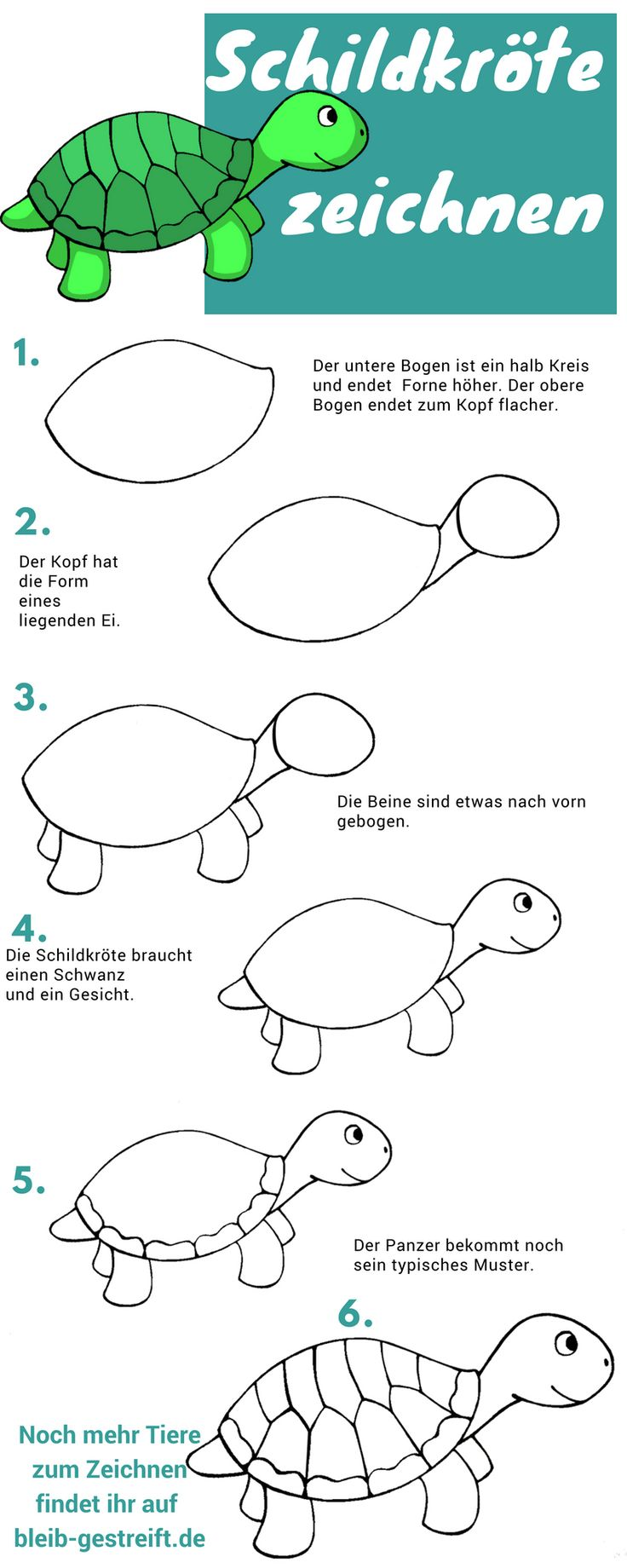 Schildkröte zeichnen lernen – eine Anleitung in 6 Schritten