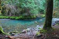 Lower Gray Wolf River - good day trip from Edmonds/Kingston ferry or weekend camping near SequimRivers Hiking, Wolf Rivers, Gray Wolf, 800 Ft, Lower Gray, Rivers T-Shirt, Elevator Gain, Olympics Peninsula, National Forests
