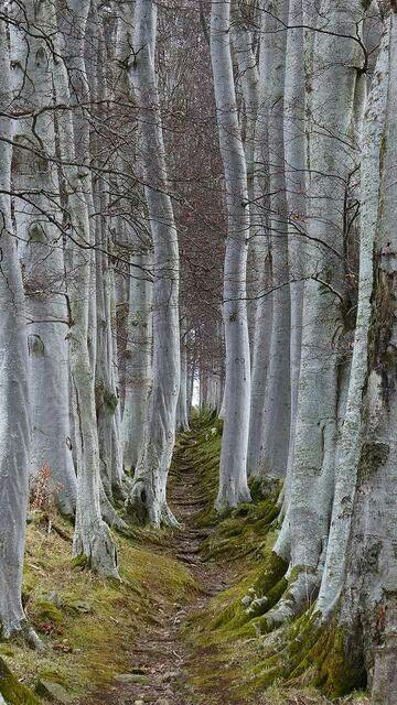 A pathway made by natural means.