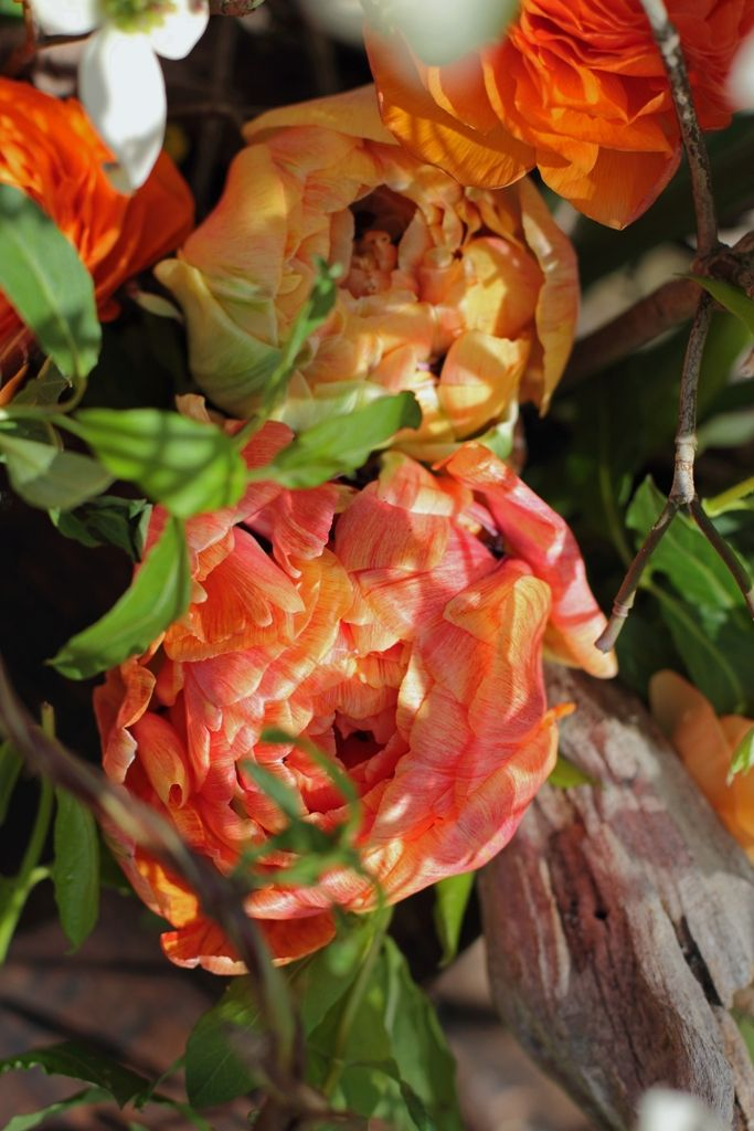 Double tulips are ruffled and much more interesting than the standard tulip- R: another flower idea