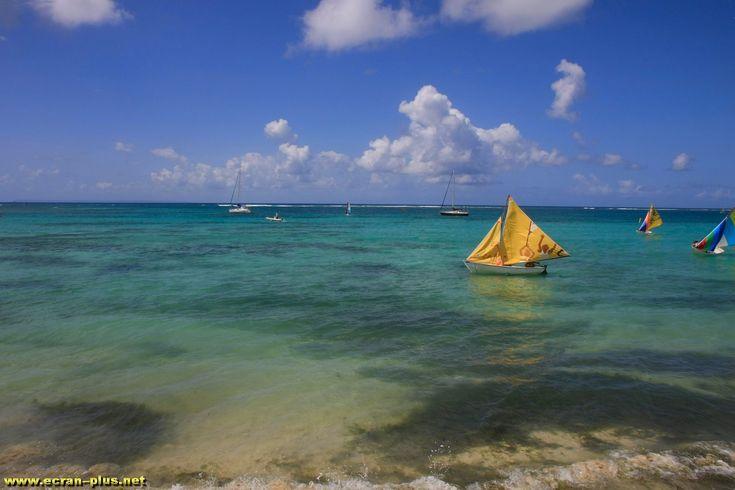 Ecole de voile a Sainte Anne - Guadeloupe