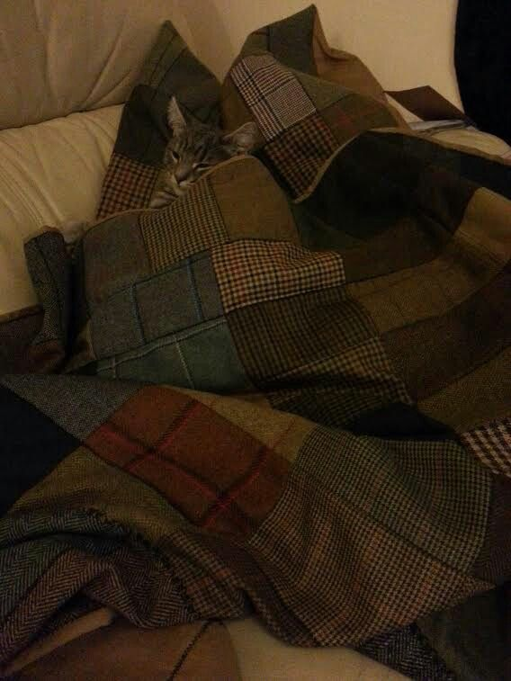 Spud enjoying my tweed patchwork quilt and cushion. www.vickytommansporter.com