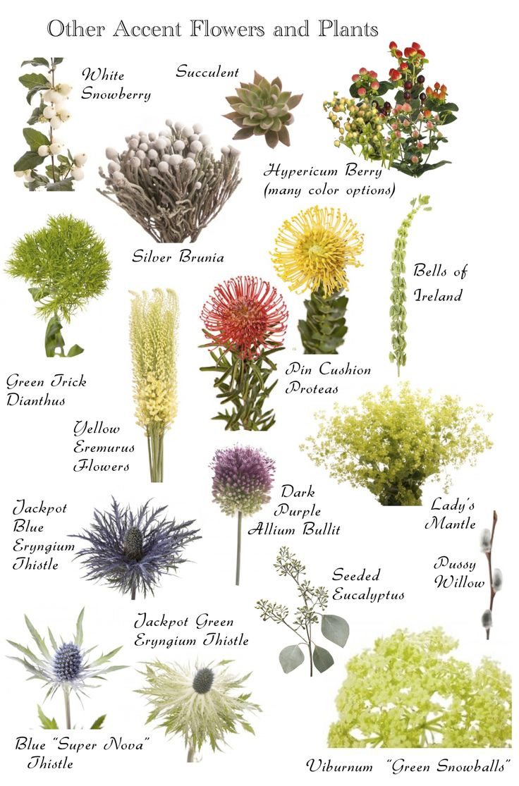 Best 25 flowers name list ideas on pinterest wedding for Landscaping ideas with plant names