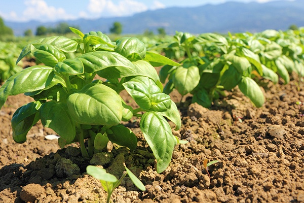 Together with our sister company, Agricen Sciences, we share the vision of improving agricultural productivity and sustainability by innovating and delivering applied, biochemical-based solutions for efficient and sustainable plant nutrition.