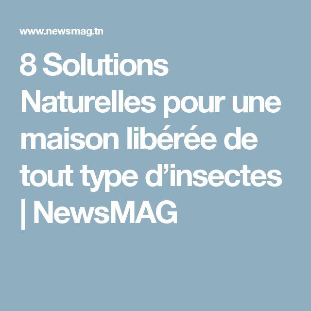 8 Solutions Naturelles pour une maison libérée de tout type d'insectes   NewsMAG