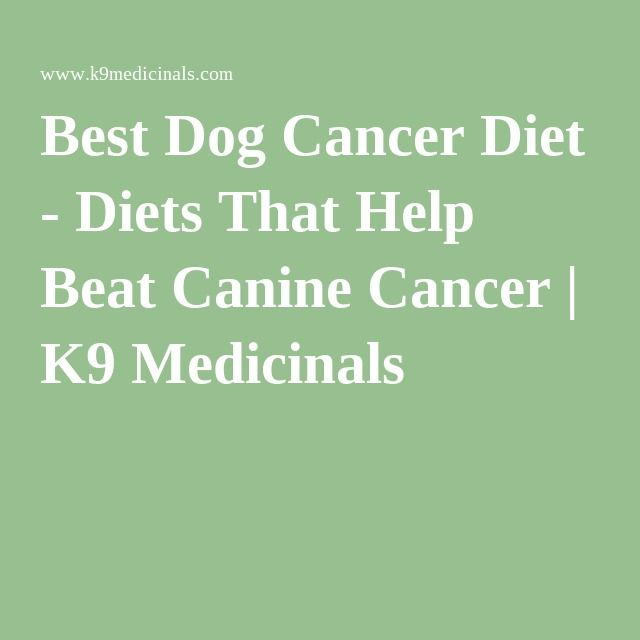 Best Dog Cancer Diet - Diets That Help Beat Canine Cancer | K9 Medicinals