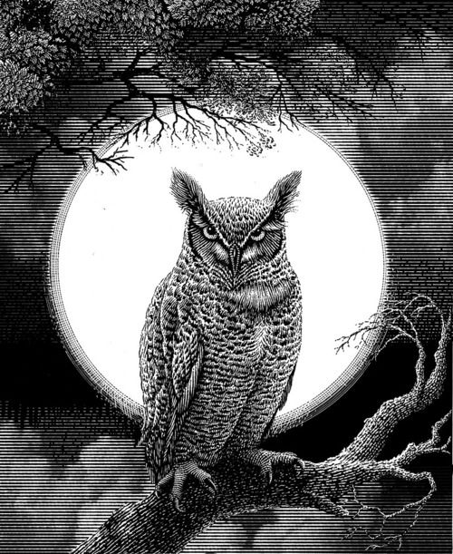 Screech Owl perched on a branch in Front of a Full Moon