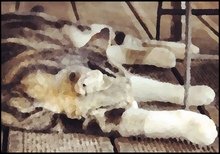 watercolour painting of sleeping cat