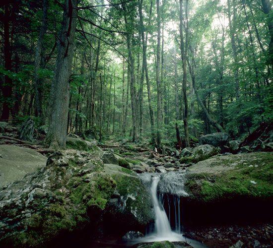 25+ Bästa Shenandoah National Park Idéerna På Pinterest