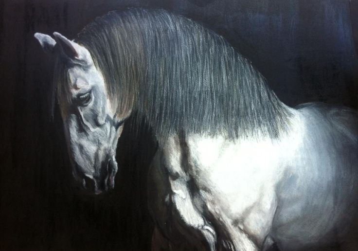 """LUSITANO STALLION made by Rita Marques Guedes -  """"Zimbabwué"""" A2 - oil pastels"""