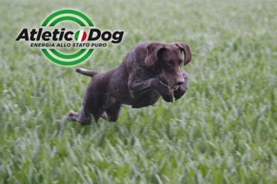 Caccia e cinofilia: Atletic Dog alta energia, per cani pronti a tornare protagonisti