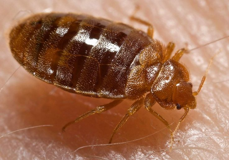 You've Got Bed Bugs! Now, Remove Them Forever.