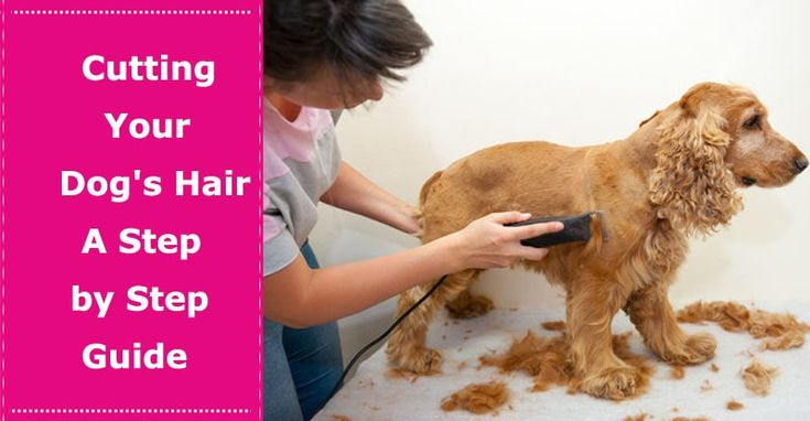 Cutting Your Dog's Hair – A Step by Step Guide to How to Dog Haircut - PetXU
