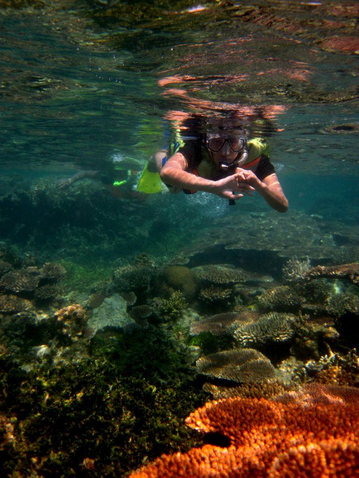 explore the dazzling coral gardens