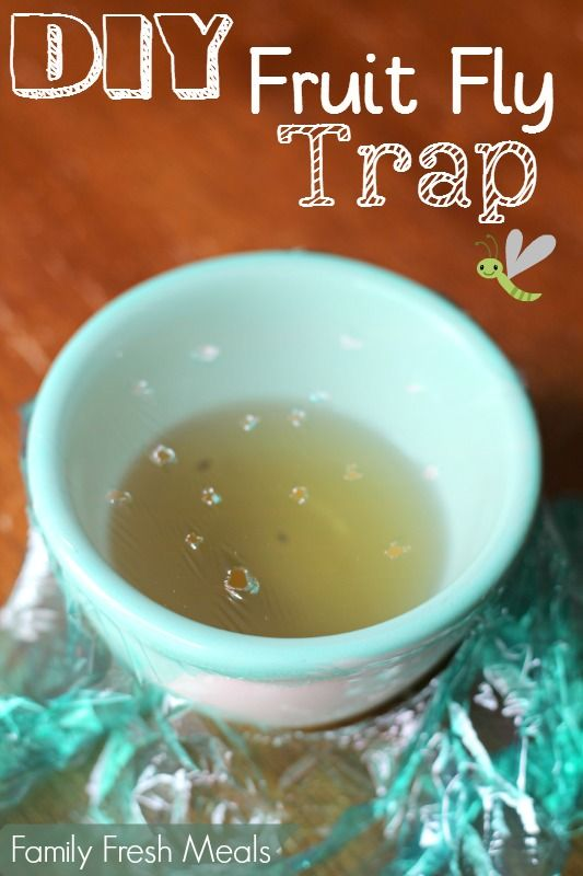 diy easy fruit fly trap recipe fly traps meals and fruit fly traps. Black Bedroom Furniture Sets. Home Design Ideas