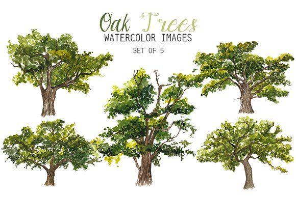 Watercolor Oak Trees Clipart By Yesfoxy On Creativemarket Tree