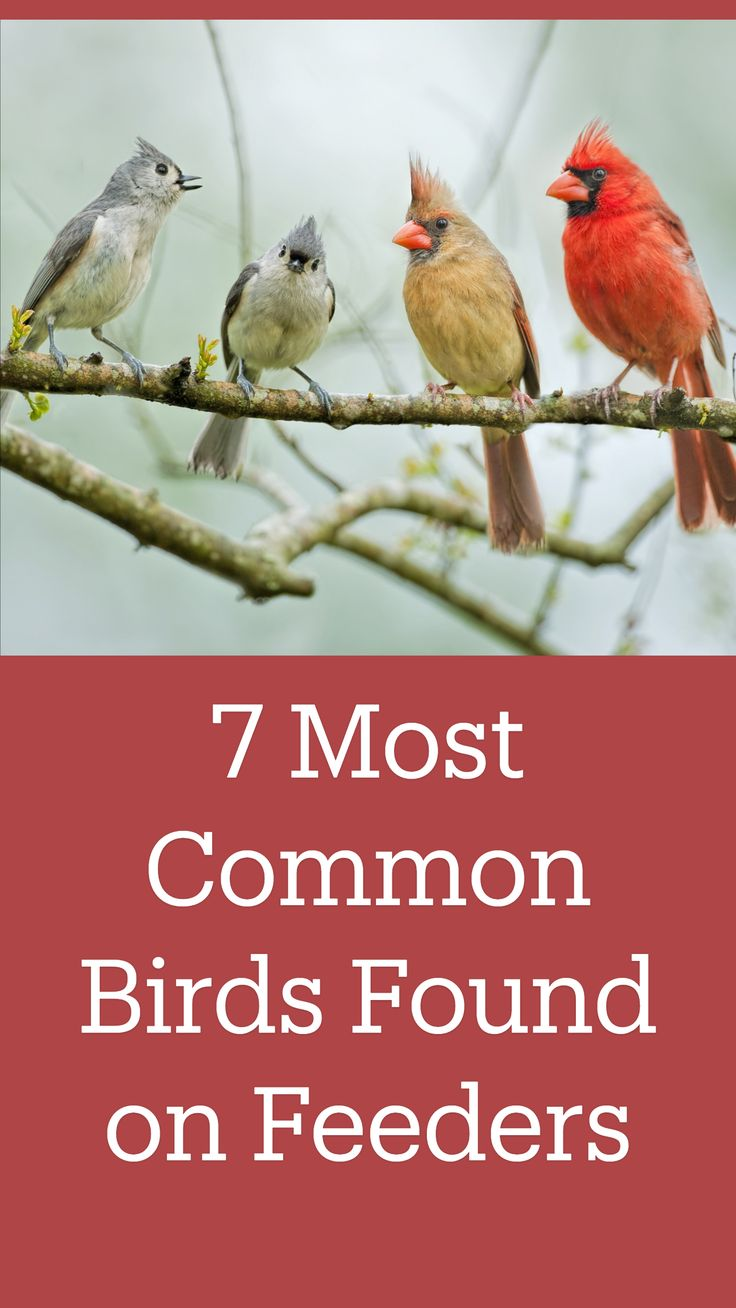 Garden Yard Ideas, Garden Projects, Backyard Ideas, Bird Identification, Downy Woodpecker, What Is A Bird, Common Birds, Short Hair Trends, Bee Friendly