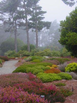 Heath & Heather Garden Design Workshop