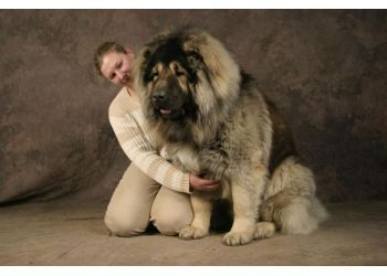 This is not me in the pic,but the dog is absolutly gorgeous. Dogs are my passion!