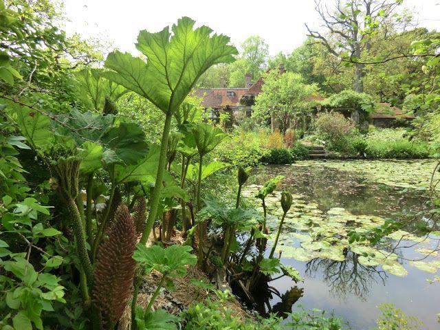 Den Passionerade Trädgårdsturisten: Trädgårdsturistens resa: Engelska trädgårdar och Chelsea flower show 21-24 maj 2012 / pond. Gunnera