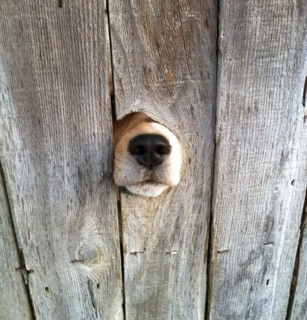 """""""I can't see you but I still wanted to give you a little hello!!"""" 