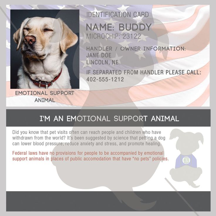 Can Your Dog Fly Free With An Emotional Support Card